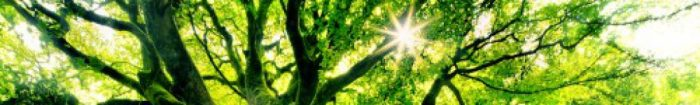 cropped-big-green-tree-of-life-wallpaper-500x313.jpg